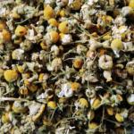 Rumianek pospolity (Matricaria chamomilla) – wszechstronne ziółko