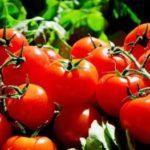 Likopen – cudowny związek chemiczny, czyli jedz pomidory